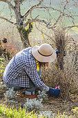 Jardinière nettoyant un massif en fin d'hiver