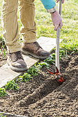 Sowing seeds in ribbon: Step 1, dig a groove