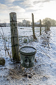 Bucket of food set up by hunters to feed game in winter, Pas de Calais, France