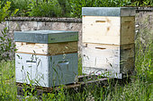 Beehives in a private garden in the spring, Moselle, France