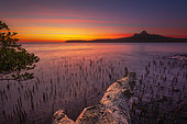 Sunset on a mangrove in the Bay of M'zouazia, Mayotte