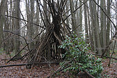 Shelter made with branches in the forest of Fausses-Reposes in Ville-d'Avray, Hauts-de-Seine, Ile-de-France, France