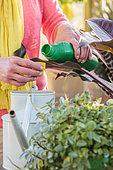 Woman bringing liquid fertilizer to houseplants.