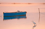 Little egret (Egretta garzetta) walking around a blue boat in Ebro delta Natural Park, Spain