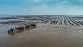 Landscape of mudflat with background oyster activity, Baie de Bourgneuf, Pays de Retz