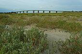 Grande Côte Beach and Noirmoutier bridge, La Barre-de-Monts, Ocean-Marais de Monts, Vendée, France