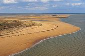 Dune and Grande Côte Beach, La Barre-de-Monts, Ocean-Marais de Monts, Vendée, France