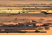 Drifting ice at sunset in Scoresbysund, North East Greenland