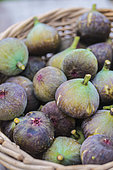 Autumn figs picked from a basket. Late figs are the most susceptible to the bursting of the autumn rains.