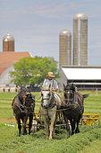 amish man, rowing hay, Lancaster county, Pennsylvania