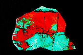 """"""" Sonoran sunrise"""", Rock slab, polished, composed of Chrysocolla(blue) and Cuprite(red) and iron(black), from the Milpillas Mine, Cuitata, Municipio de Cananea, Sonora, Mexico."""