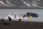 Tourists in the warm waters of Whaler's Bay, Antarctic fur seal (Arctocephalus gazella), Deception Island, Antarctica.