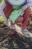 Turnip seedlings online