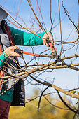 Woman carving a Mulberry tree in winter