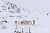 Dog sledge, Disko Bay, Greenland.