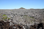 Lava flow in the Tsingy fossil coral reef of Ankarana, 18 220 ha NP over 35 km, North-West Madagascar