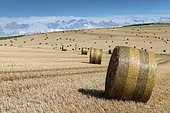 Straw rolls in a harvested field, Pas de Calais, France