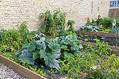 Kitchen squares on an urban farm in town in summer, Pas de Calais, France