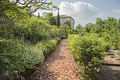 A row of terracotta sherds and corded apple trees. In the Garden of Heaven, Cordes sur Ciel, Occitanie, France