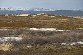 Tundra, Varangerfjord, Norway