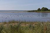 Coastal Swamp, Saaremaa Island, Vilsandi National Park, Estonia