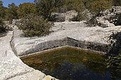 Aiguier 'Grognard', Saint-Saturnin-lès-Apt, Vaucluse, Provence, France