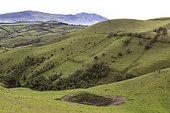 Paysage agricole andin au dessus de Quito vers 2500 m, Andes, Equateur