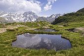 Reflection of Sirac (3441m) on a peat bog, La Chapelle-en-Valgaudemar, Ecrins National Park, Hautes-Alpes, France