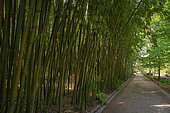 Bambouseraie, Bamboo plot and shady alley of the Montpellier botanical garden, France