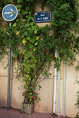 """Vegetation of the city by micro-flowering,Lady Banks Rose (Rosa banksiae Rosea) and Princesstree (Paulownia tomentosa), Mediterranean district, Rue de l'aire, Montpellier, France In the framework of """"Montpellier Cité Jardins"""", the City of Montpellier sets up a """"Permis to vegetate »"""