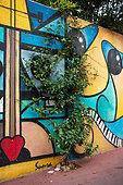 "Vegetation of the city by micro-flowering, Confederate jasmine (Trachelospermum jasminoides), Mediterranean district, Rue de l'aire, Montpellier, France In the framework of ""Montpellier Cité Jardins"", the City of Montpellier sets up a ""Permis to vegetate »"