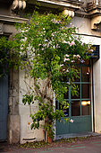 """Vegetation of the city by micro-flowering, Pink Trumpet Vine (Tecoma ricasoliana), Mediterranean district, Montpellier, France In the framework of """"Montpellier Cité Jardins"""", the City of Montpellier sets up a """"Permis to vegetate »"""
