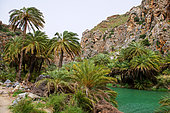 Palms Forest of Preveli, Crete, Greece