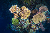 Coral Biodiversity. That's what a healthy reef looks like: color, diversity, life! Mayotte