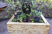 Plantations in a wooden bin, spring, Pas de Calais, France