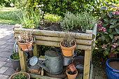 Aromatic plants in a wooden bin, summer, Pas de Calais, France