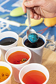 Coloring quail eggs with natural dyes for Easter, spring, Pas de Calais, France