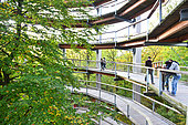 Beech forest, Binz, Rugen Island, Mecklenburg-Vorpommern, Germany. The treetop walk of the Naturerbe Zentrum is 20m hight upon the trees.