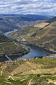 Vineyard of the Upper Douro Valley, Portugal