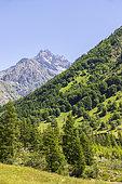 Drac Valley of Champoléon, Champsaur, Écrins National Park, Hautes-Alpes, France