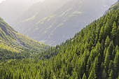 Hiking on the GR Country Trail, Tour du Vieux Chaillol, Champolon Drac Valley, Champsaur, Écrins National Park, Hautes-Alpes, France