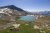 Natural Reserve of the Cirque du Grand Lac des Estaris (2555m), Orcières Merlette, Écrins National Park, Hautes-Alpes, France
