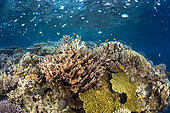 Color of the reef. A photo of a reef as we would like to see more.