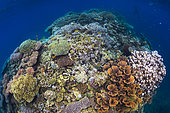 Coral reef, Mayotte. Coral reefs are catalysts of biodiversity