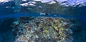 Panoramic reef, a panoramic view of the platier of N'gouja, Mayotte