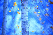 Color of tree in autumn, Yebes, Castilla la Mancha, Spain