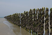 Strips of paper flutter with the wind to scare the birds in the Jospinet mussels in Planguenoual, Brittany, France
