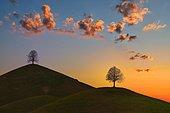 Hilly landscape with trees in the morning light, sunrise, Hirzel area, Neuheim, Canton Zug, Switzerland, Europe