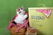 Tabby and white kitten sitting in red gingham basket by yellow bread box