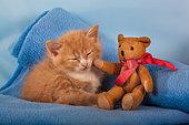 Orange and white kitten sleeping with teddy bear on blue blanket in studio